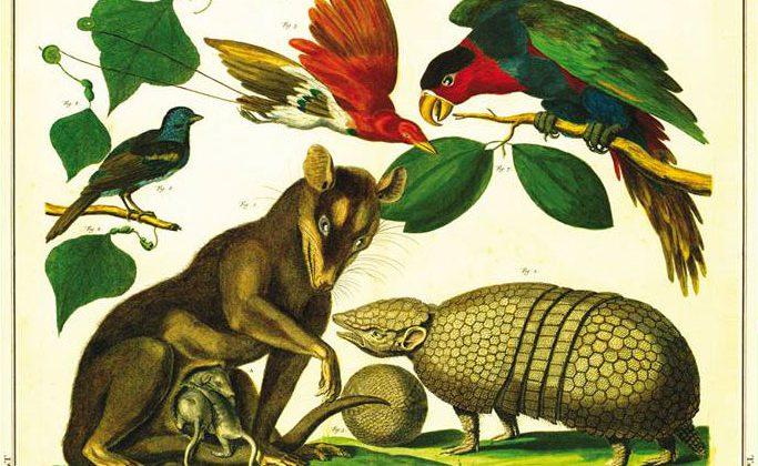 Fragmento de la portada de La pampa grande.